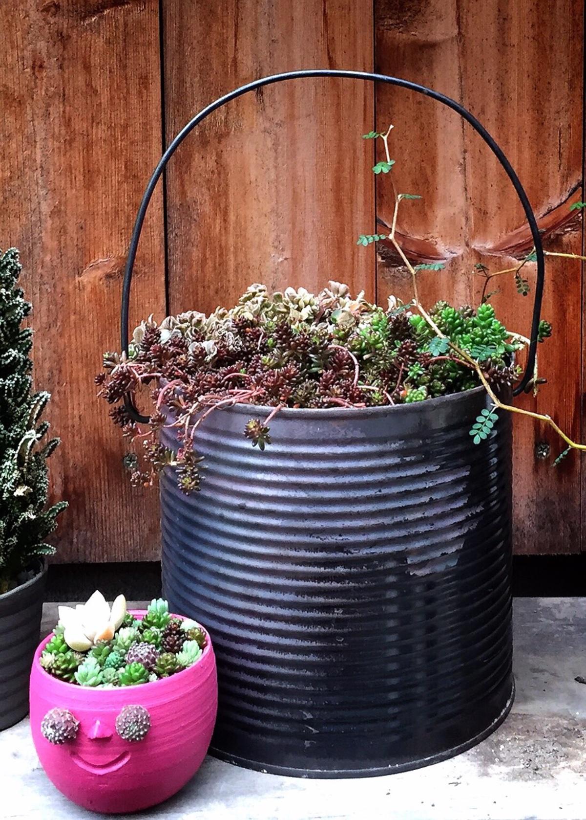 焼き缶セダムの寄せ植え&タニク顏制作